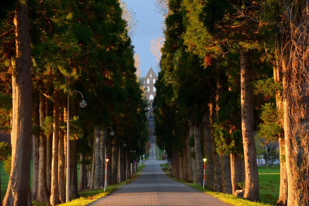 杉木立の向こうに見える修道院