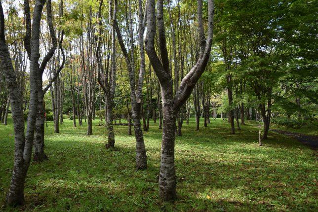 ナナカマド林