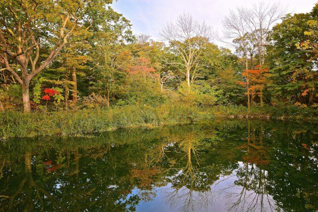 パレットの絵の具のような紅葉が沼に映える
