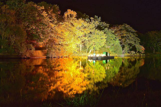 日没になって紅葉がライトアップされた