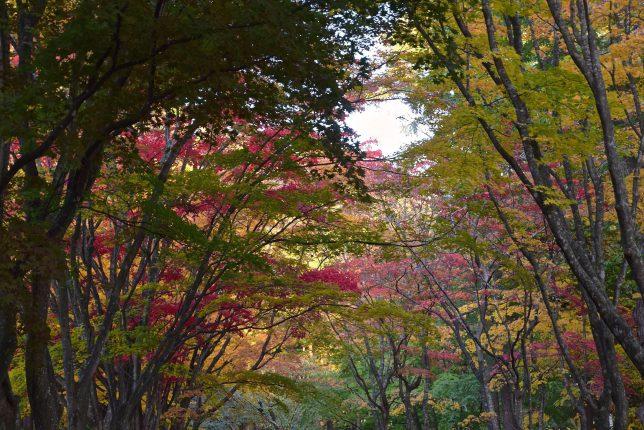 見晴公園の紅葉は見頃でやはり美しい。