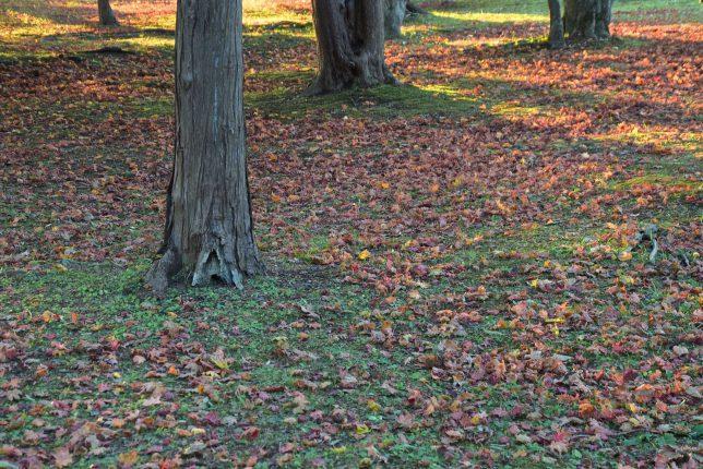 足下を見るともう落葉が始まっていた。緑の芝生と落葉の色合いが綺麗だった。
