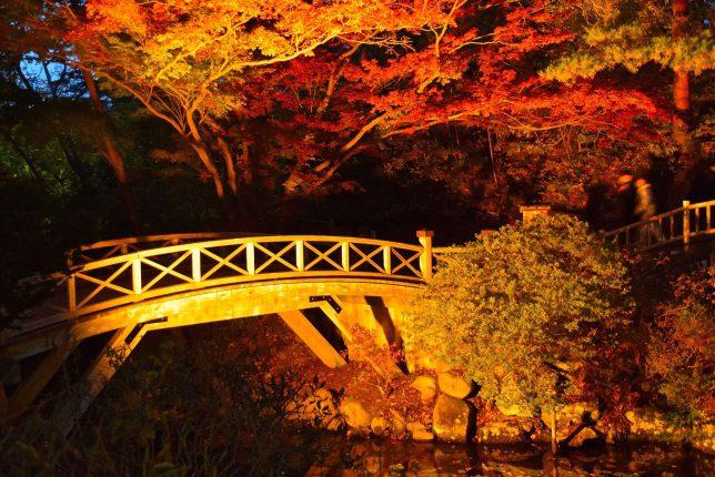 公園内の雰囲気のある木橋と紅葉