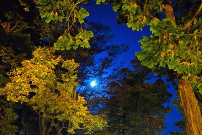 紅葉の木々の間からブルームーンが顔を覗かせた。
