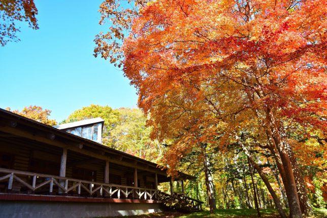 森林公園内の杉風館