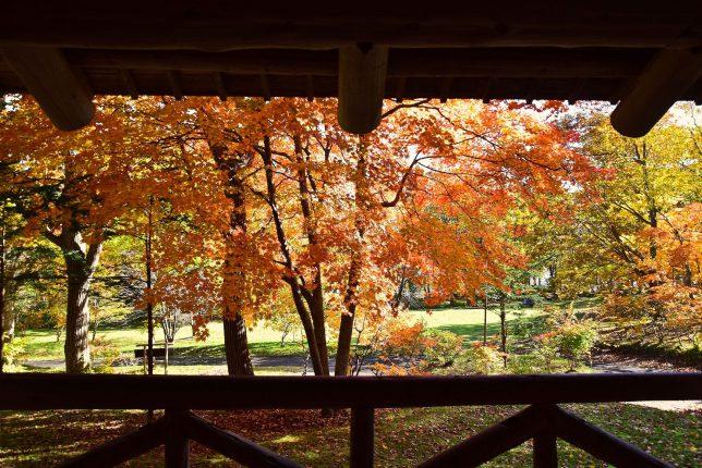 杉風館から眺める紅葉