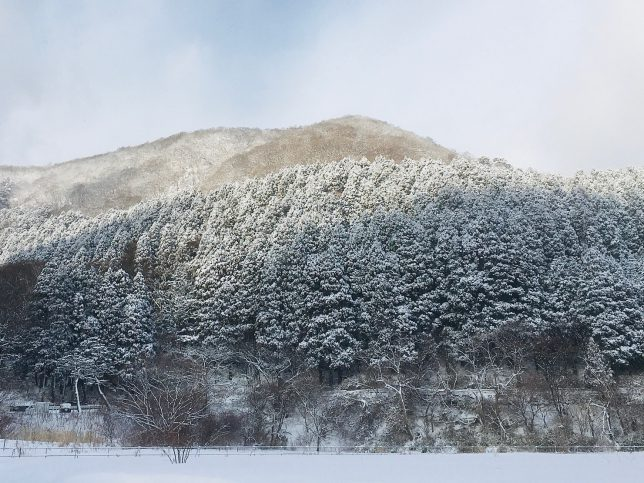 函館八幡宮を包むように抱く函館山山麓はすっかり雪化粧である