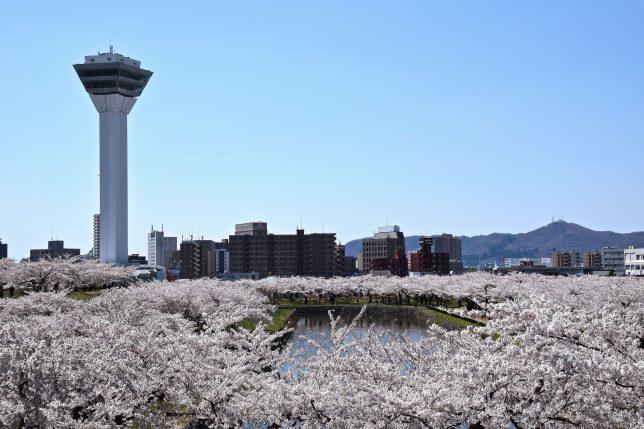雲海のような桜を通して函館山を見る