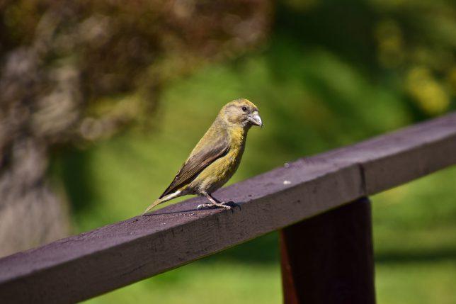 ふと見るとシロハラだろうか野鳥が柵の手摺りに羽を休めていた