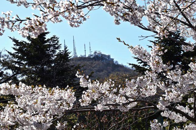 ふと見上げれば函館山の山頂が間近にみえる