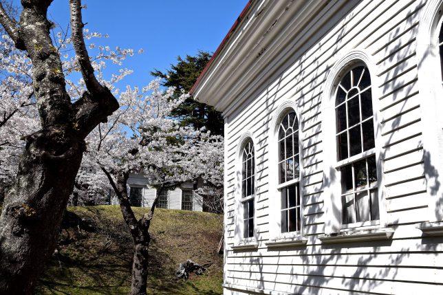 旧博物館一号と二号の白さと桜が青空に映える