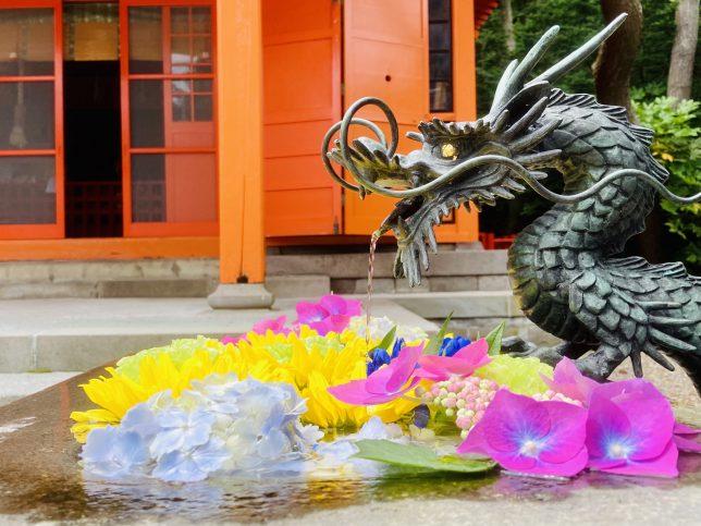 函館八幡宮境内に鶴若稲荷神社があってここの手水鉢にも切り花が散りばめられていた。美しい切り花に囲まれて龍が心なしか微笑んでいるようにみえる。