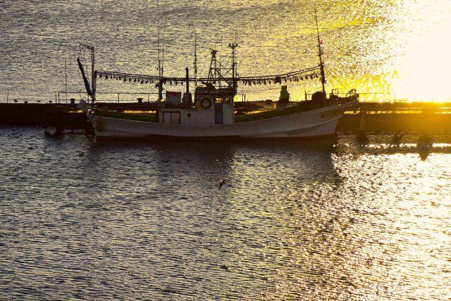 ともえ大橋の足元をみるとイカ釣り船が停泊していた。細波が夕日にきらきら反射して美しい。
