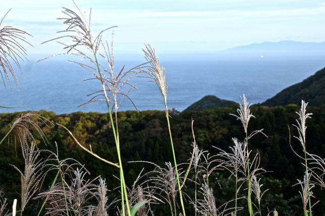 ススキ越しに津軽海峡が見えてきた。